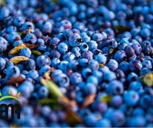 effects of blueberry on your skin