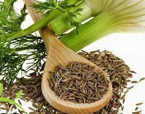 how does fennel can lose weight?