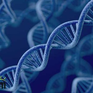 genes are important factor in lossing weight