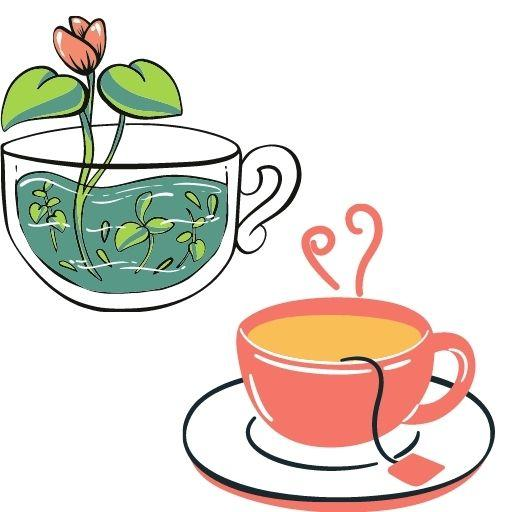 herbal tea to boost the immune system